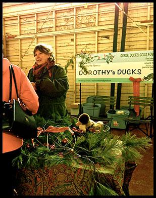 Dorothy's Ducks