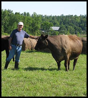 Coopérative d'éleveurs de bovins Fitzroy